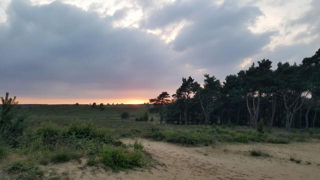 Raceverslag: Hoge Veluwe Trail 14 km